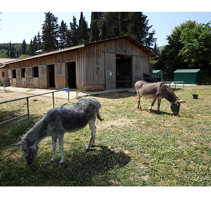 Animal Welfare videos