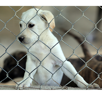 Filming at a dog shelter