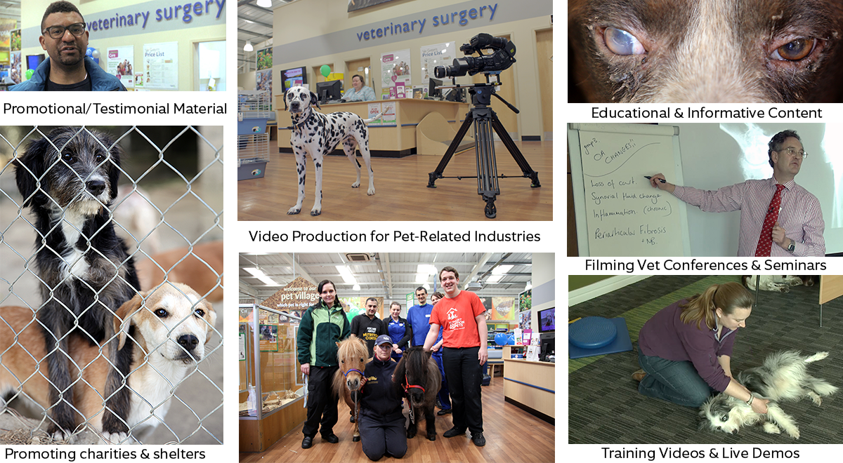 Veterinary Industry Video Production